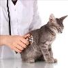 Ветеринарные клиники в Усть-Илимске